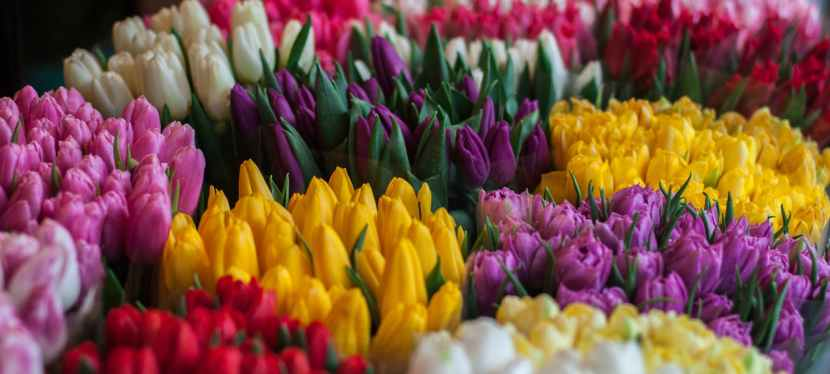 Order your Easterflowers